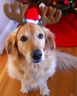 Our Own Reindeer