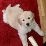 Recent Eats + Puppy Updates