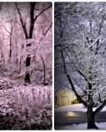 Snow + Yoga + Food