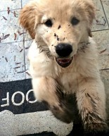 Life Lately: The Final Push + A Muddy Puppy + LBD