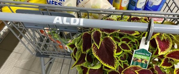What I Bought at ALDI + Over 30 of My Favorite Things to Buy at ALDI